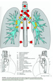 Naruke lymph node map